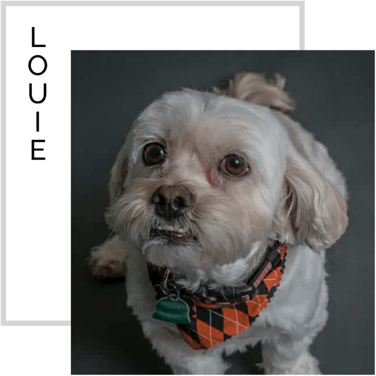 Louie, dogs at work, spade design